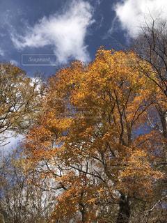 自然,風景,空,紅葉,日光,中禅寺湖,天気,栃木県,草木,日中