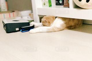 子猫の写真・画像素材[581379]