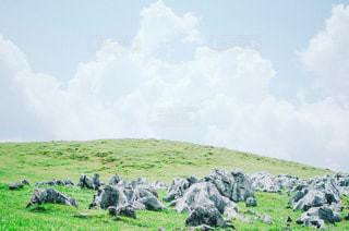 草の覆われてフィールド上に立って動物の群れの写真・画像素材[1433435]