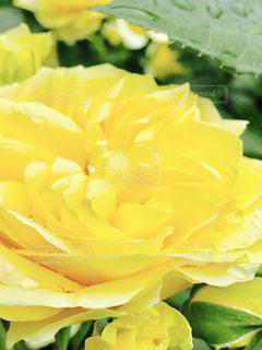 花の写真・画像素材[606507]