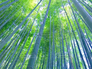 報国寺の竹林の写真・画像素材[1024409]