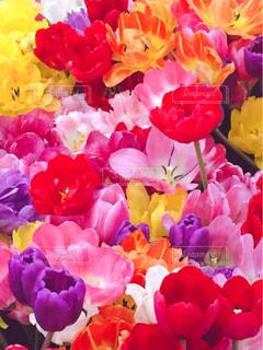 近くの花のアップの写真・画像素材[1540408]
