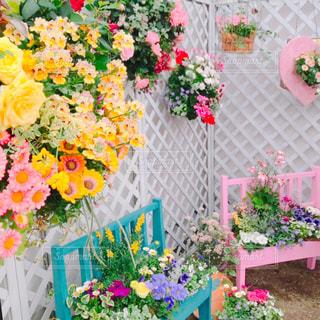 春の花々の写真・画像素材[2023044]