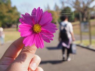花を持っている手 - No.768530