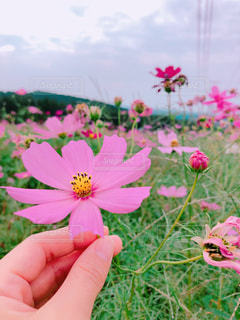 近くの花のアップ - No.848207