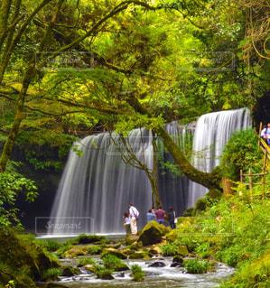 森の中の大きな滝の写真・画像素材[898034]