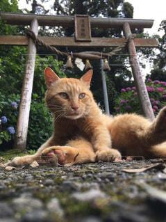 地面に横になっている猫 - No.975326