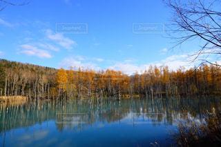 自然,空,秋,紅葉,湖,水面,池,北海道,景色,樹木,旅行,青い池,11月,美瑛,モミジ