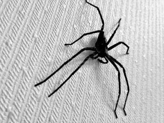 クモの写真・画像素材[653106]