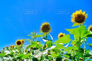 近くに黄色い花のアップ - No.713417