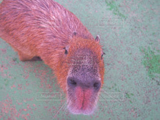 その口を開いて動物の写真・画像素材[721402]