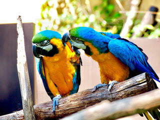 カラフルな鳥が木の枝に止まってください。 - No.721417