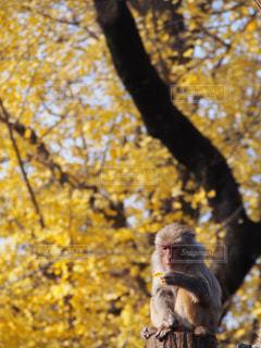 木の上に座って猿の写真・画像素材[869325]