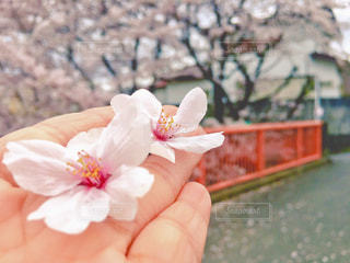 花を持っている手の写真・画像素材[888148]