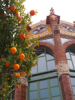 世界遺産,オレンジ,フルーツ,スペイン,バルセロナ,赤レンガ,サン・パウ病院