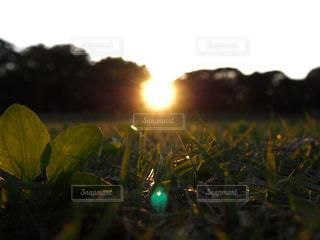 近くに緑のフィールドのの写真・画像素材[1166111]
