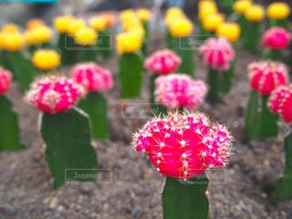 近くの花のアップの写真・画像素材[1166117]