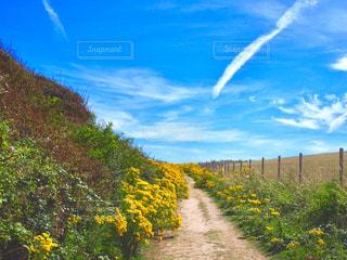 草と木とパスの写真・画像素材[1166131]