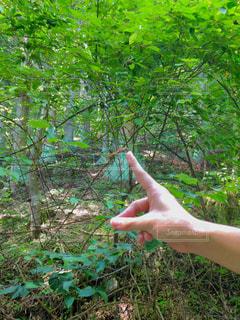 緑の森を持っている手の写真・画像素材[1166140]