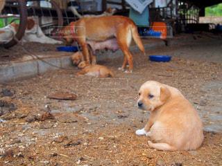 地面に座っている犬の写真・画像素材[1183364]