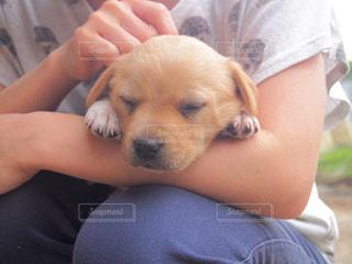 犬を持っている人の写真・画像素材[1183365]