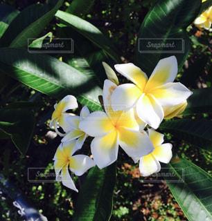 花の写真・画像素材[596950]