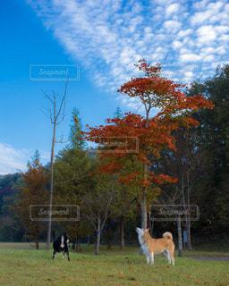 秋を感じる。の写真・画像素材[845046]