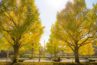 秋色の休日の写真・画像素材[868202]