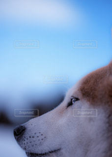穏やかな眼差しの写真・画像素材[981891]