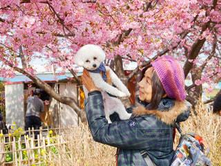 犬,風景,空,春,桜,絶景,ピンク,菜の花,樹木,お花見,トイプードル,愛犬,たかいたかい