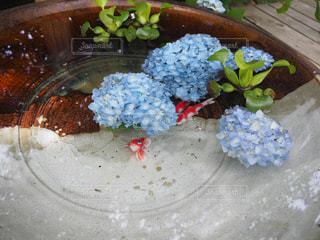 水,紫陽花,梅雨,6月,金魚,明月院