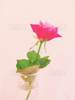 ピンク色のバラの花瓶の写真・画像素材[855518]
