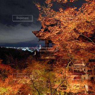 背景の山と木 - No.876065