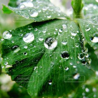 雨降りの光玉の写真・画像素材[1073124]