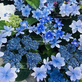 花の輪の写真・画像素材[1380355]