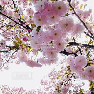 花,春,屋外,ピンク,植物,鮮やか,日中