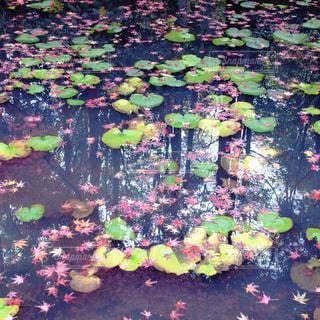 空,秋,紅葉,屋外,植物,水,日中