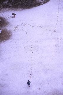 新雪の小さな足跡の写真・画像素材[1661406]