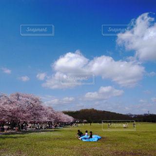 自然,空,花,桜,屋外,雲,花見,人物