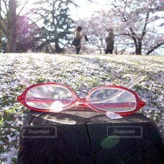 自然,花,桜,花見,人物