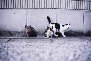 猫,動物,屋外,地面,フィルム,フィルム写真,フィルムフォト