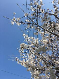 木の枝に止まっている鳥たちの群れ - No.1098212