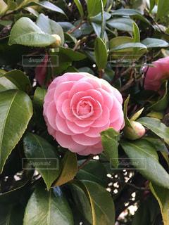近くの花のアップの写真・画像素材[1122845]