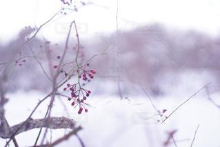 冬と食料の写真・画像素材[1676004]