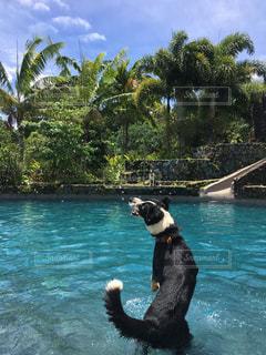 水体で泳ぐ犬 - No.718931