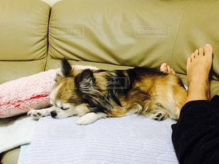 ベッドの上に横たわる犬 - No.745039