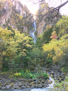 森の大きな木の写真・画像素材[778902]