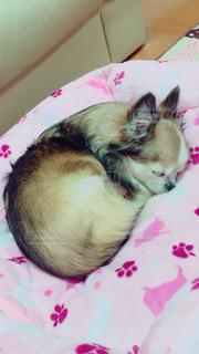 ベッドの上で横になっている猫の写真・画像素材[871822]