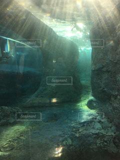 水面下を泳ぐ魚たち - No.880429