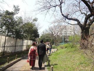 ツリー横の通りを歩く人々 のグループの写真・画像素材[1098980]
